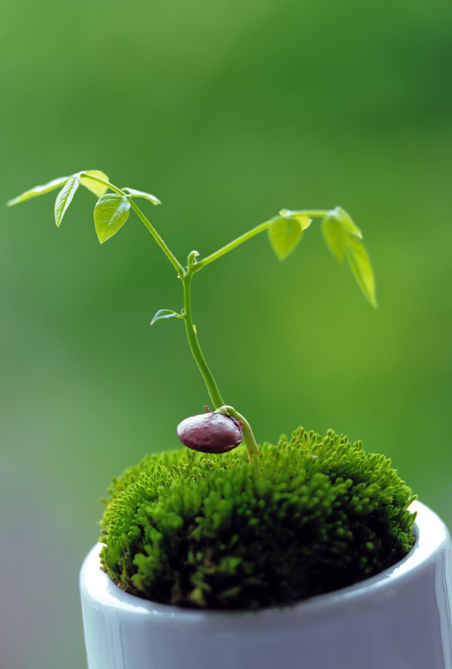 Clube Ambiente/Projeto Escola Verde